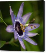 Passiflora Canvas Print by Mike Reid