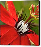 Passionate Flower Canvas Print by Heiko Koehrer-Wagner