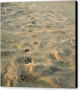 Paw Prints In The Sand Canvas Print by Roberto Westbrook