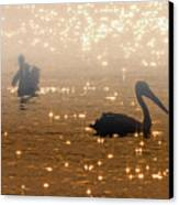 Pelican Sunrise Canvas Print by Mike  Dawson