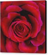 Perfect Rose Canvas Print by Joel Payne