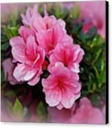 Pink Azaleas Canvas Print by Sandy Keeton