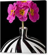 Pink English Primrose Canvas Print by Garry Gay
