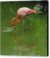 Pink Flamingo Canvas Print by Cindy Lee Longhini