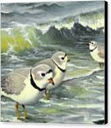 Piping Plovers At The Shore Canvas Print by Tara Milliken