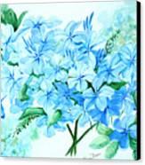 Plumbago Canvas Print by Karin  Dawn Kelshall- Best