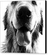 Portrait Of A Happy Dog Canvas Print by Osvaldo Hamer