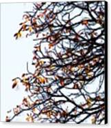 Praha Tangled Tree Canvas Print by Shawn Wallwork