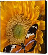 Pretty Butterfly On Sunflowers Canvas Print by Garry Gay