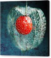 Prison Of Love Canvas Print by Philippe Sainte-Laudy
