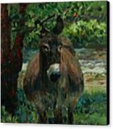 Provence Donkey Canvas Print by Nadine Rippelmeyer