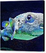 Puffer Fish Canvas Print by Jane Schnetlage