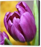 Purple Spring Canvas Print by Linda Sannuti