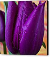 Purple Tulip Canvas Print by Garry Gay