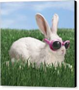 Rabbit With Sunglasses Canvas Print by George Caswell