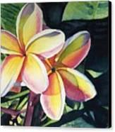 Rainbow Plumeria Canvas Print by Marionette Taboniar
