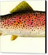 Rainbow Trout Canvas Print by Michael Vigliotti