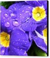 Raindrops On Blue Flowers Canvas Print by Carol Groenen