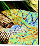 Rattler Canvas Print by Peter  McIntosh