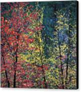 Red And Yellow Leaves Abstract Horizontal Number 1 Canvas Print by Heather Kirk