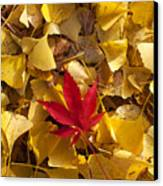 Red Autumn Leaf Canvas Print by Garry Gay