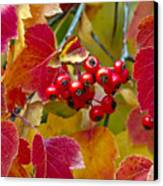 Red Berries Fall Colors Canvas Print by James Steele