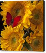 Red Butterfly With Four Sunflowers Canvas Print by Garry Gay