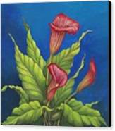 Red Calla Lillies Canvas Print by Carol Sabo
