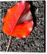 Red Leaf On Asphalt Canvas Print by Douglas Barnett