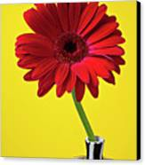 Red Mum Against Yellow Background Canvas Print by Garry Gay