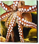 Red Octopus Canvas Print by Marilyn Hunt