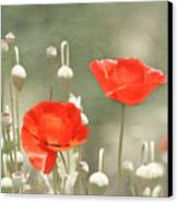 Red Poppies Canvas Print by Kim Hojnacki