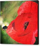 Red Poppy Impression Canvas Print by Angela Doelling AD DESIGN Photo and PhotoArt