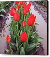 Red Tulip Row Canvas Print by Kami McKeon