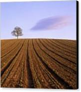 Remote Tree In A Ploughed Field Canvas Print by Bernard Jaubert