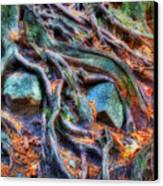 Roots And Rocks Canvas Print by Naman Imagery