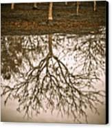 Roots Canvas Print by Derek Selander