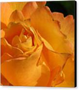 Rose In Ruffles Canvas Print by Mg Blackstock