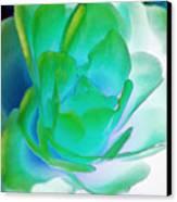 Rose Sea Canvas Print by Lynne Furrer