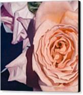 Rose Splendour Canvas Print by Kerryn Madsen-Pietsch