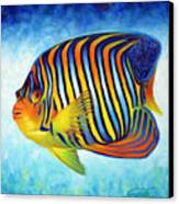 Royal Queen Angelfish Canvas Print by Nancy Tilles