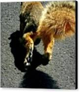 Runaway Fox Squirrel Canvas Print by Beth Akerman