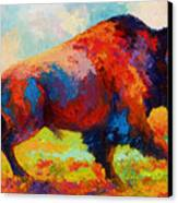 Running Free - Bison Canvas Print by Marion Rose