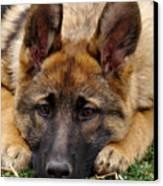 Sable German Shepherd Puppy Canvas Print by Sandy Keeton