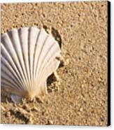 Sandy Shell Canvas Print by Jorgo Photography - Wall Art Gallery