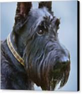 Scottish Terrier Dog Canvas Print by Jennie Marie Schell