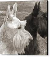 Scottish Terrier Dogs In Sepia Canvas Print by Jennie Marie Schell