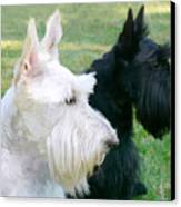 Scottish Terrier Dogs Canvas Print by Jennie Marie Schell