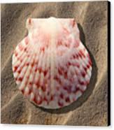 Sea Shell Canvas Print by Mike McGlothlen