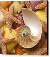 Sea Shells And Starfish Canvas Print by Garry Gay